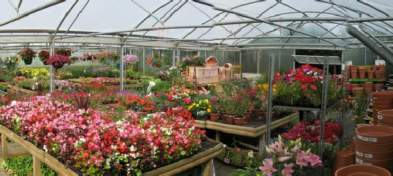 Newbridge Nursery and Plant Centre Garden Centres in